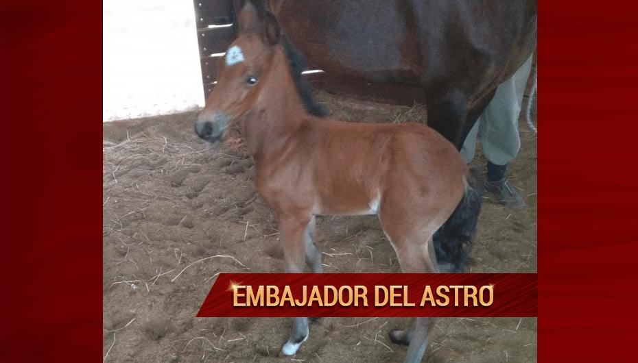 Embajador-del-Astro.png