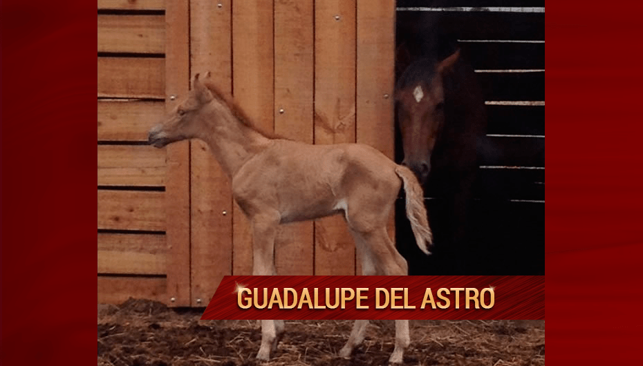 Guadalupe-Del-Astro.png