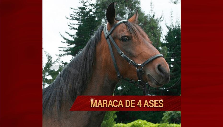 Maraca-de-4-Ases.png