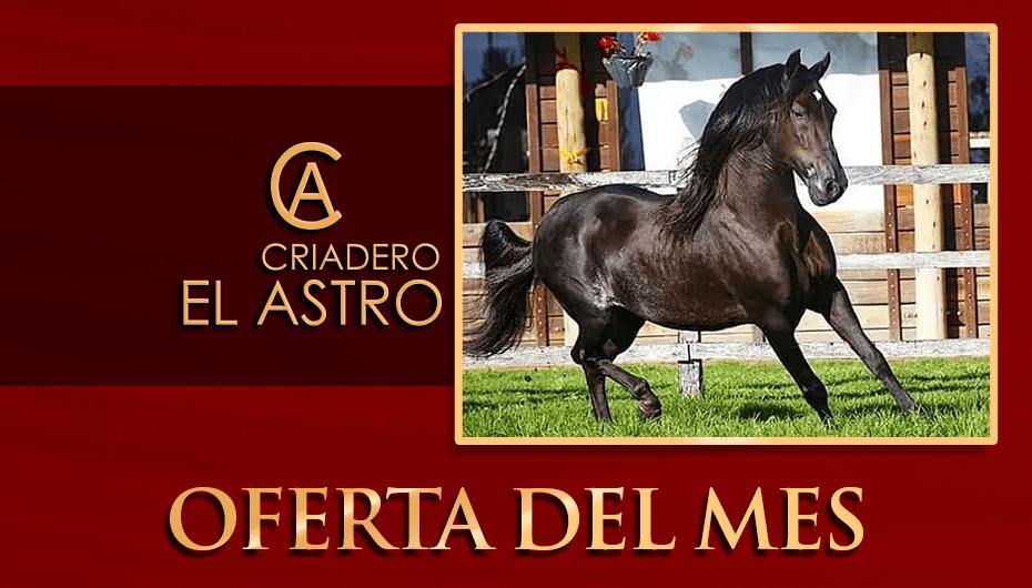 PROMO_OFERTA-DEL-MES-1.png