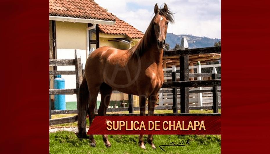Suplica-de-Chalapa.png
