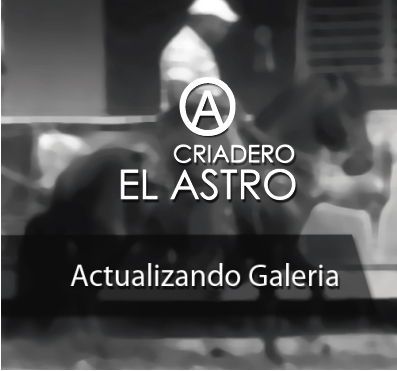 ACTUALIZANDO-GALERIA