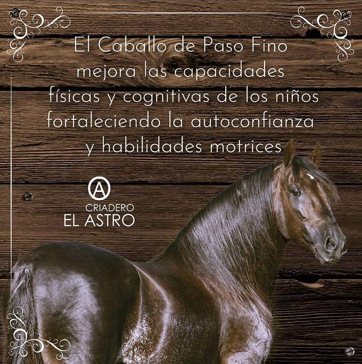 MartesdePasoFino-Queremos-reconocer-los-beneficios-del-Caballo-de-Paso-Fino.png