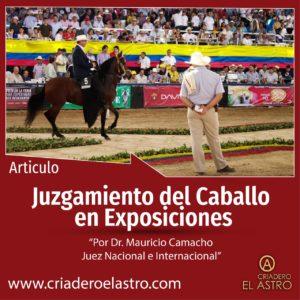 Juzgamiento del Caballo de Paso Fino en Exposiciones Equinas