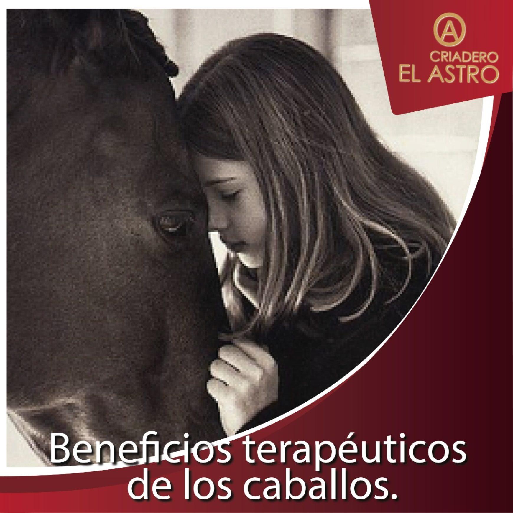 Beneficios terapéuticos  de los caballos.