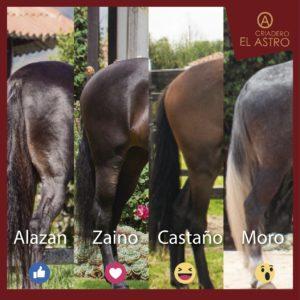 Cuéntale al Criadero el Astro cual es tu color favorito en los caballos?.