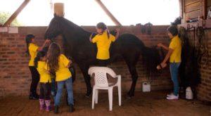 criadero_el_astro El amor por los caballos se ve reflejado en nuestros hijos, Aquí vemos a las futuras amazonas, que representan el CCC, es de gran orgullo para nosotros ver crecer día a día esta pasión en nuestros pequeños gigantes.