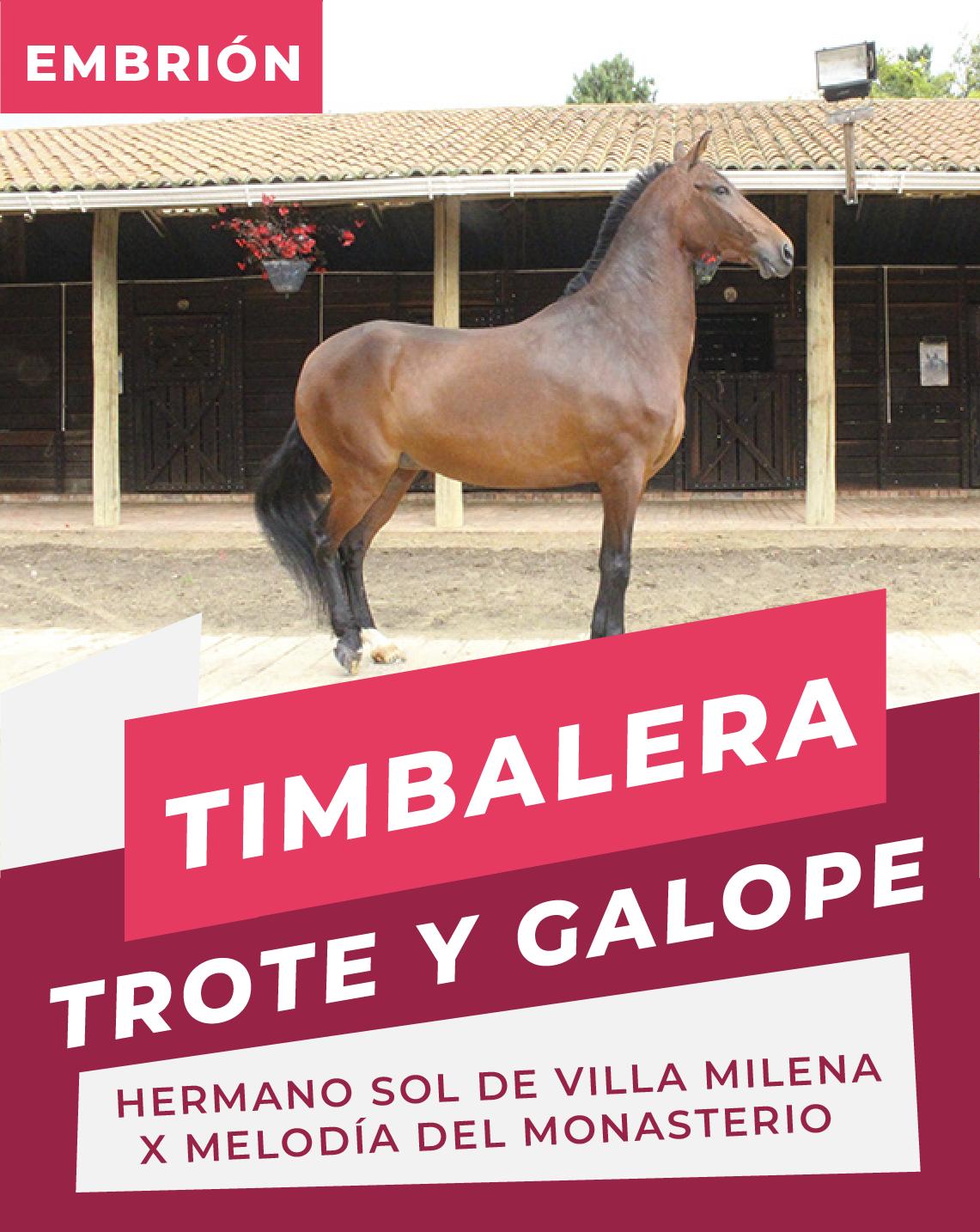 Timbalera ( Hemano Sol de villa milena x Melodia de monasterio)